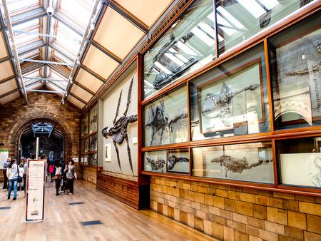 natural landmark: ancient fossil exhibition at The Natural History Museum, London, UK