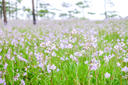 beautiful meadow in Pho Soi Dow national park, Thailand