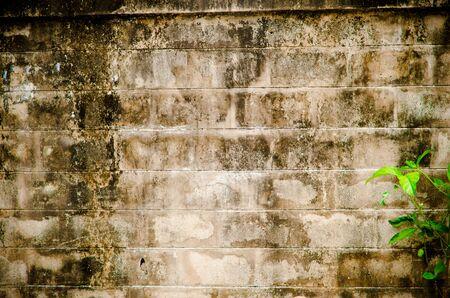 grunge brick wall with moss photo
