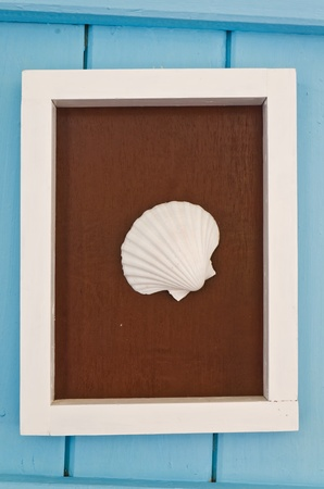 White shell on the frame with blue wall Stock Photo - 12782352