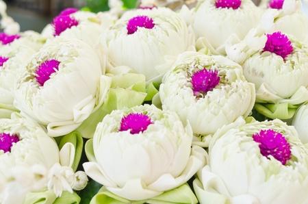 White lotus and Pink Glob-Amaranth Comoran flower background photo