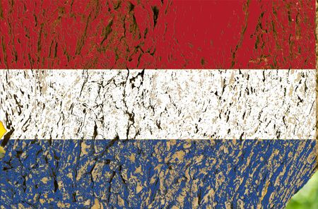 Holland flag background of tree - texture photo