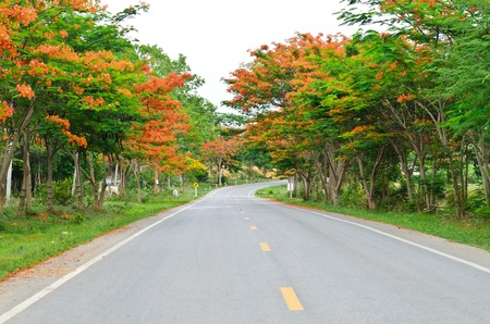 Road among colorful trees on the way to mountain photo