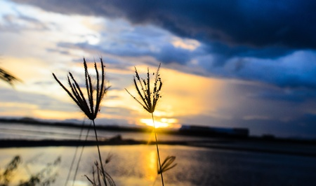 Silhouette of Grass Flowers against a Beautiful Sunset Stock Photo - 15363301