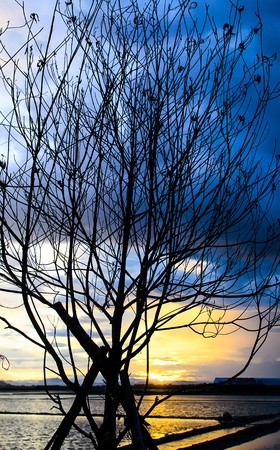 Texture of branch tree with silhouette sun set photo
