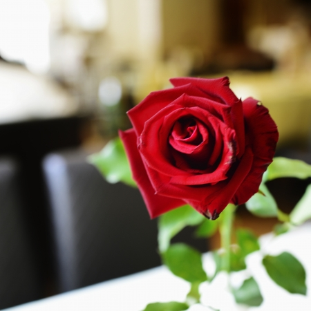 Red rose on table photo