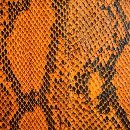 snake skin with the pattern photo