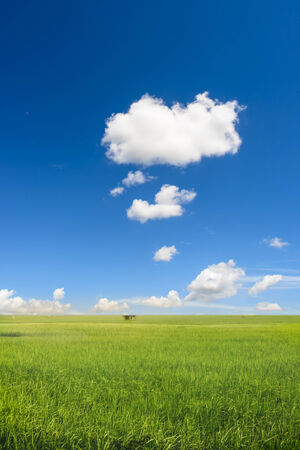 blue gold: Rice field with sky. Stock Photo