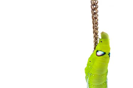 Green caterpillar climbing on chain. photo