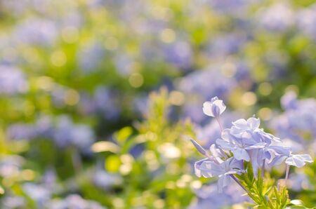 purple flowers: Purple flowers, beautiful natural background, spring