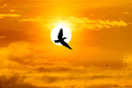 migrate: silhouette bird and the sun Stock Photo
