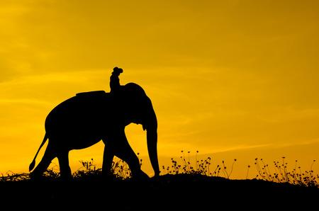 Elefanten und Gras Silhouetten Hintergrund mit Sonnenuntergang.