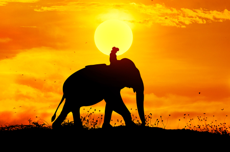 Elephant and grass silhouettes background with sun set. photo