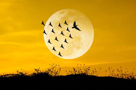 sinergia: Luna grande y las aves siluetas de fondo conjunto de sol. Liderazgo Concep