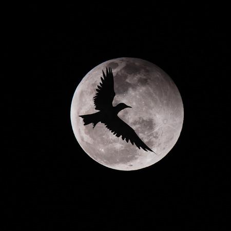 Birds fly over the moon, success concept photo