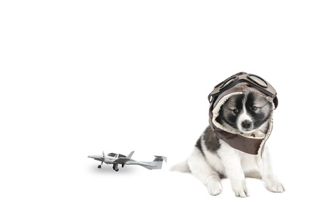 pilot helmet: Puppy with pilot helmet and plane toy on white background. Stock Photo