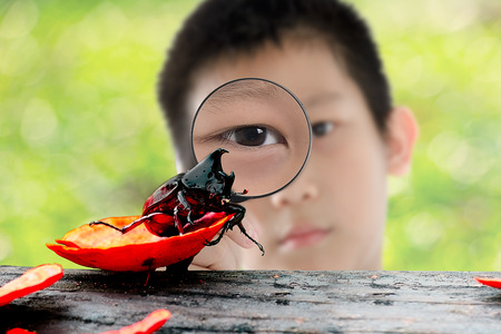 coleoptera: Asian kid with magnifying glass and Coleoptera outdoor.  Selective focus at insect.