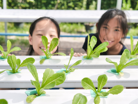 Happy Asian children enjoy in yydroponics system greenhouse ,food and agriculture concept. Selective focus. Reklamní fotografie
