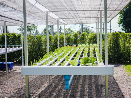 Hydroponics system greenhouse and organic vegetables salad in hydroponics farm for health, food and agriculture concept Reklamní fotografie