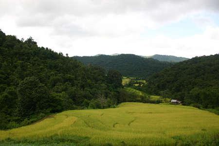 chaingmai: Field in valley, Doi Intanon, Chaingmai, Thailand Stock Photo