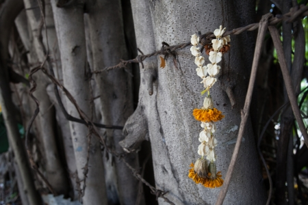 withered and dried thai garland and barbed wire photo