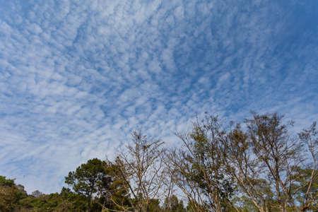 altocumulus: Altocumulus clouds above a mountain