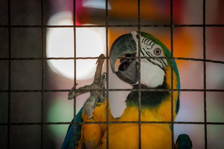 confined space: Macaw in a cage like a prisoner