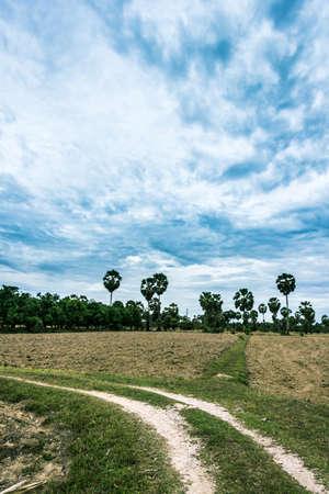 tragedies: Tillage farmers were ready to plant rice when it rains.