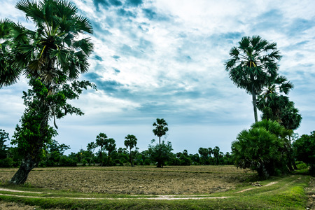 tragedies: The field of the farmer to prepare the ground to wait for rice farming, when the rainy season.