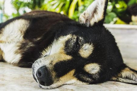 Dog sleeping unawares Songkhla, Thailand.