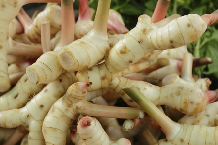 oriental food: Galangal is a plant in Thailand Used as a condiment And many medicines