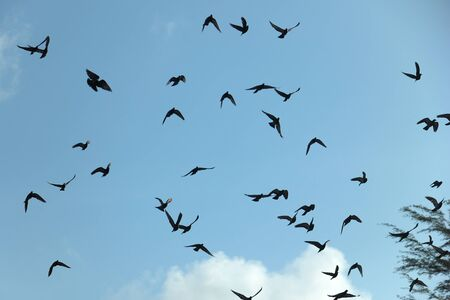 homing: Freedom and liberty, a flock of pigeons in the sky.