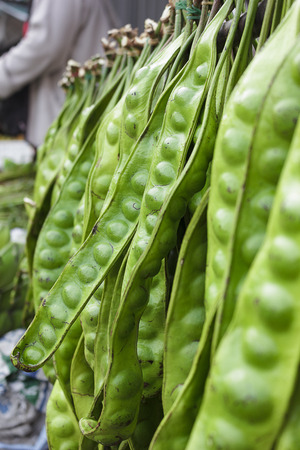 pungent: Sato is a plant used as food ingredients southern Thailand has a very pungent smell