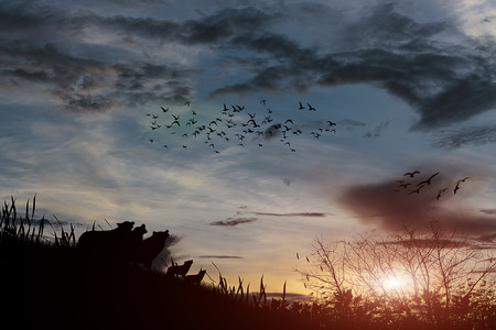 dramatic clouds: silhouette sunset nature  with  effect Stock Photo