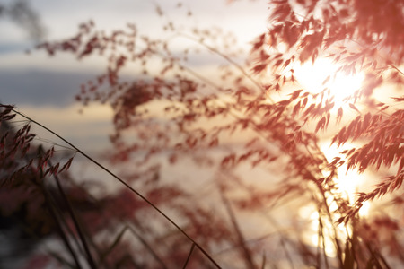 Sunset view through grass and wind