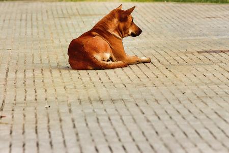 Dog sleep pictures Banco de Imagens