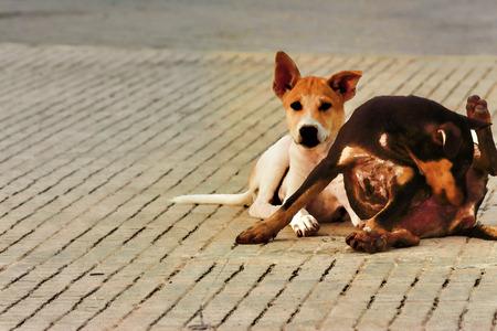 Dog sleep Fotografías