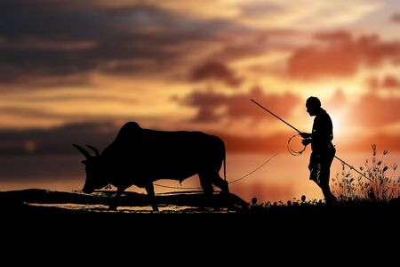 Cow fighters and cowboys Walk out every day to keep the cattle healthy.