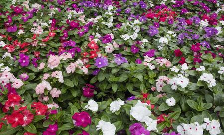 Beautiful phlox flowers in the garden