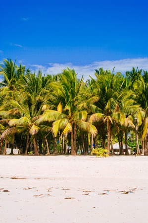 bathe: Landscape of paradise tropical island with palms and white sand beach