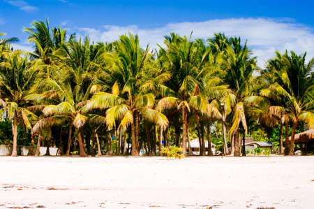 sugar palm: Tropical white sand beach with green palm trees. Exotic island paradise Stock Photo