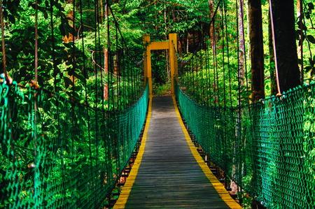 Hanging bridge in rain forest of Borneo