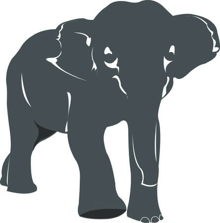 biggest animal: elephant