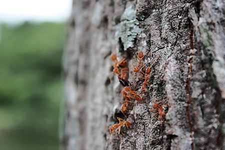 Group of working ant Stock Photo - 8609095