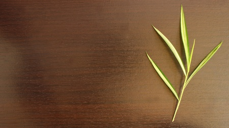 Bamboo leaves on brown wood
