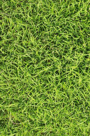 Grass field texture photo