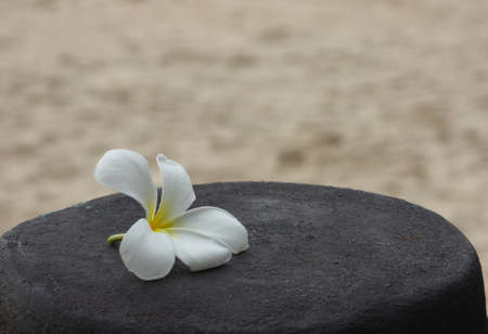 White plumeria on the beach Stock Photo - 9578244