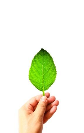 Green leaf on hand