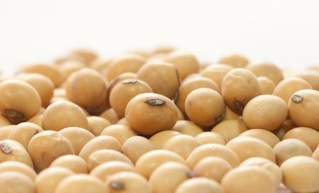 Soy bean Standard-Bild