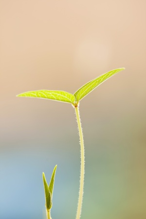 Beautiful young green leaf photo